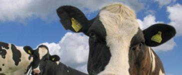 Увеличеното търсене на млечни продукти в Източна Азия ще продължи да оказва подкрепа на производството