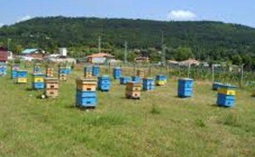 Пчеларите ще кандидатстват за de minimis от 20 ноември