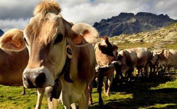 подпомагането по Мярка 14 се предоставя на земеделски стопани