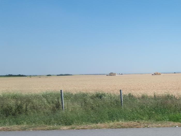 Прибрани са 624 тона пшеница и 25