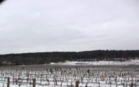 Предложението е да бъде създаден консорциум. В него участие могат да вземат всички български винопроизводители