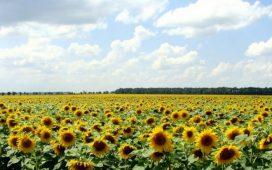 И през 2014 година Синджента България ще актуализира богатото си портфолио с нови продукти