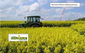 Хибридите рапица на Пионер семена са с повишена устойчивост на разпукване на шушулките