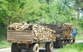 Министърът на земеделието и храните д-р Мирослав Найденов разпореди на шестте държавни горски предприятия да пуснат за продажба по 200 куб. м дърва за огрев.
