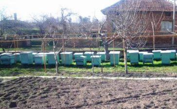 """Държавен фонд """"Земеделие"""" отпуска още близо 100 хиляди лева за финансиране на инвестициите на 48 пчелари"""