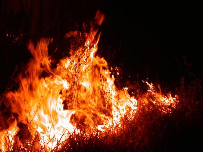 От началото на годината са пострадали  8 751 дка горски територии