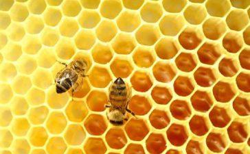 Коледно изложение на пчелен мед и пчелни продукти е построено пред сградата на МЗХ в  София