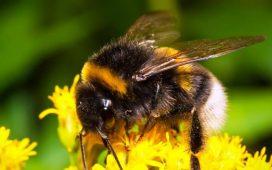 1720 договора за безвъзмездна финансова помощ по пчеларската програма са подготвени в областните дирекции на ДФЗ