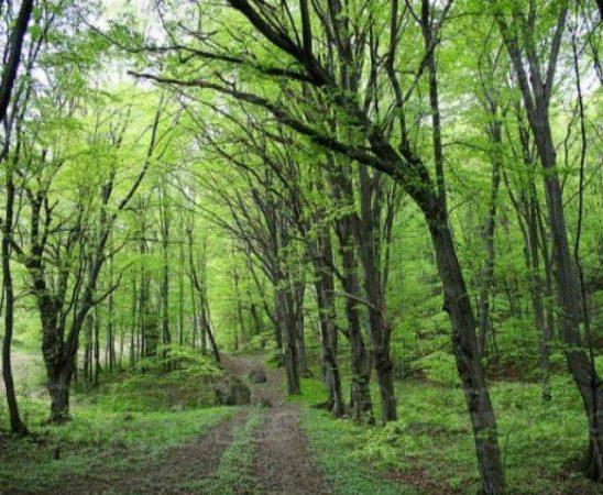 Действията се предприемат заради незаконна сеч на близо 290 дка гори в с. Кипилово в Котленския балкан