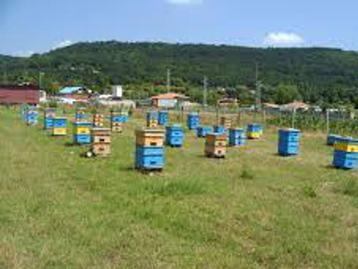 Пчеларите ще получат финансирането след приключване на проверките
