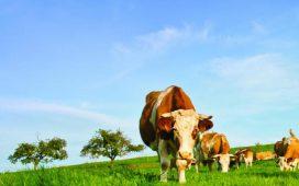Фермери ще наемат до 10 декара пасища