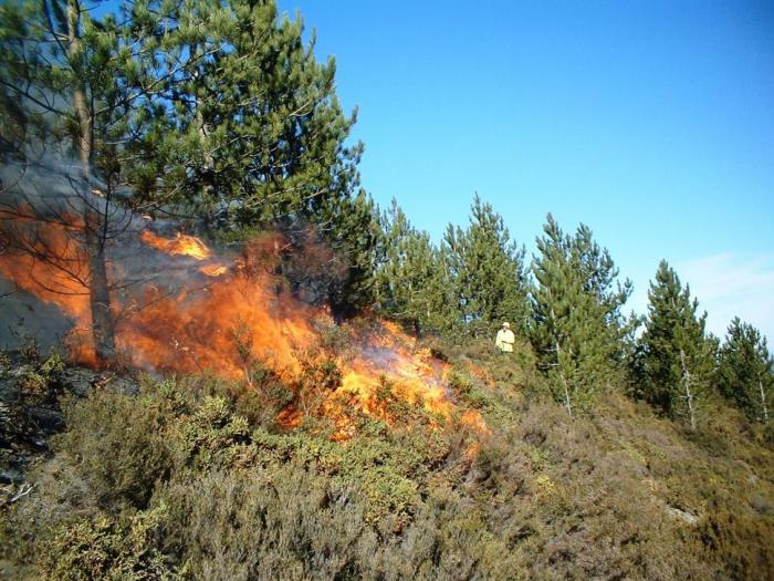 Опасност от горски пожари има в областите Благоевград