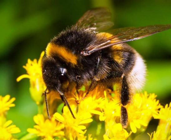 Определената помощ за пчелно семейство е 3