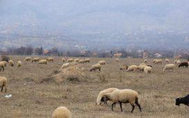 Ставки на субсидиите за животновъди по схемите за обвързана подкрепа