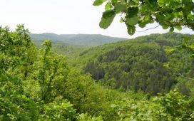 Допълнителни мерки на МЗХ за устойчиво и многофункционално стопанисване на горите (ОБЗОР)