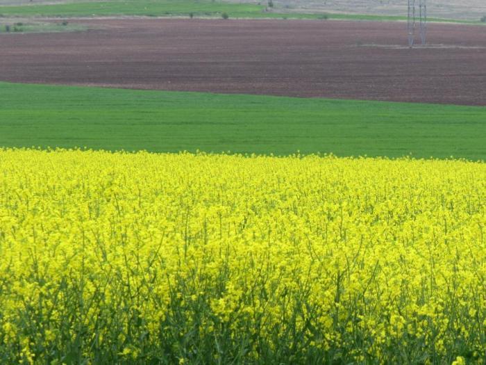 Плащанията се определят на хектар и не са обвързани с продукция или отглеждане на животни