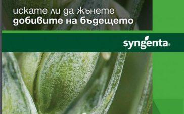 Сортове пшеница от Синджента за върхови добиви и качество