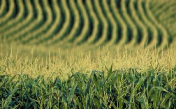 Зърнопроизводителите искат да бъде продължен мораториума върху продажбата на земеделска земя на чужденци
