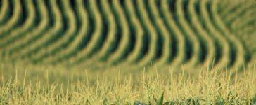 Потвърдено беше предложението на Комисията по земеделие и развитие на селските райони намалението на директните плащания да се отнася само до производители