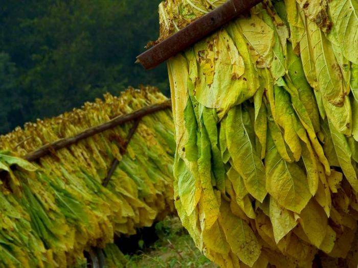 В МЗХ бяха обсъдени готвените промени в Закона за тютюна с браншовите организации на производителиот сектора