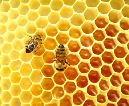 """ДФ """"Земеделие"""" обработи всички заявления за подпомагане по Мярка D """"Мерки за подкрепа на подновяване на пчелните кошери в Общността"""" от Националната програма по пчеларство."""