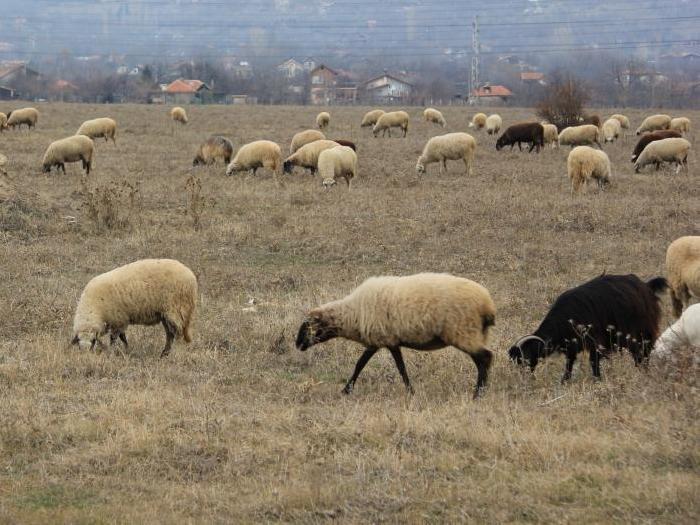 Резултатите от изследванията в област Кюстендил показват