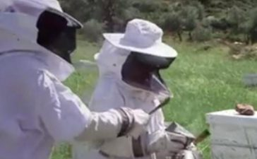 Годишно произвеждат по 600 кг мед