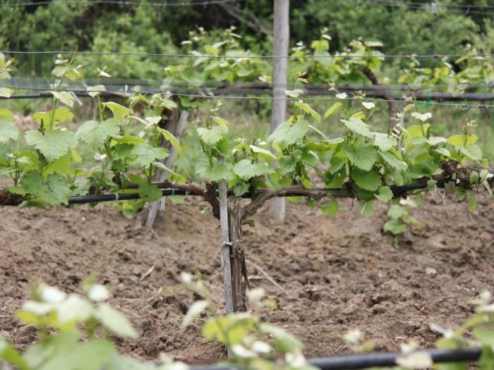 Предимство ще имат биопроизводителите и тези