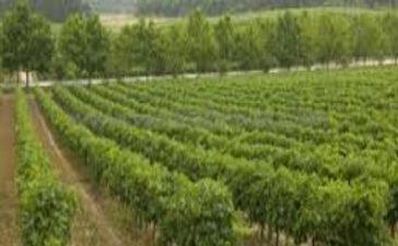 ЕК реши лозари и винопроизводители да могат да засаждат лозя с европейски средства