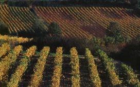 В конкурса може да се участва с бели и червени вина. Виното