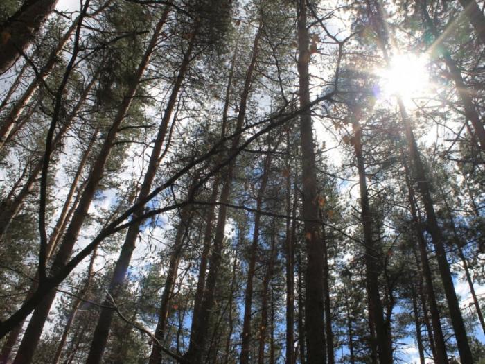 Тази мярка ще доведе до изсветляване на сектора и по-добър контрол в горите