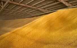 Добитата царевица превъзхожда реколтата от предходните две години