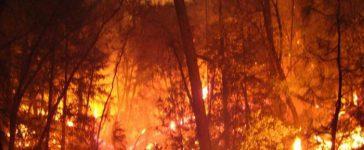 В първите области на територията на страната вече е обявена опасност от горски пожари