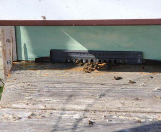 Броят на пчелните семейства достига 577 304 броя - с над 35 хиляди повече спрямо 2013 г.