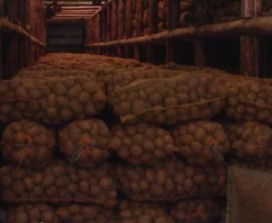 От 1 април 2015 се приемат заявленията за компенсиране на разходите за борба с телените червеи по картофите