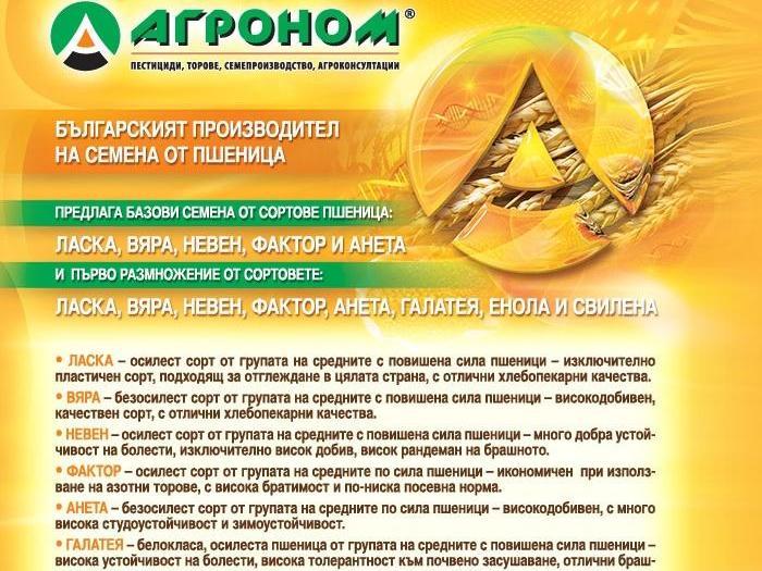Сортовете пшеница на фирма АГРОНОМ