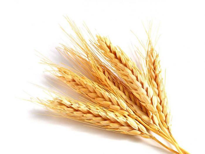 До 7 май 2014 г. всички браншови организации в сферата на земеделието могат да излъчат представител за включване в работната група