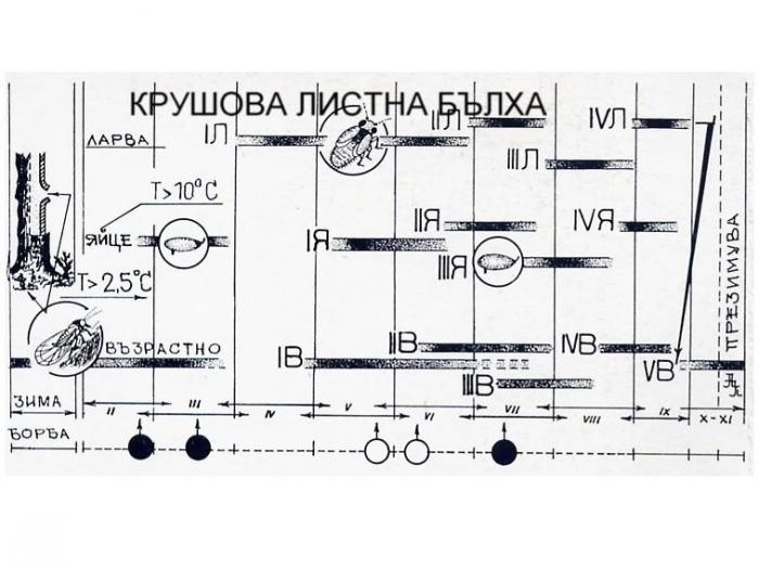 ФЕНОЛОГИЧЕН КАЛЕНДАР