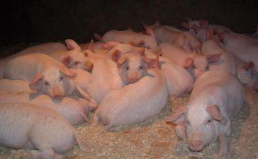 """Общо 406 заявления по схемите за хуманно отношение към птици и свине са подадени в областните дирекции на Държавен фонд """"Земеделие"""""""