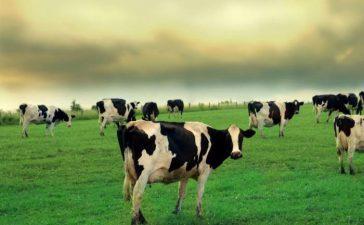 """Фонд """"Земеделие"""" изплати  957 583 523 лева по Схемата за единно плащане на площ (СЕПП)"""