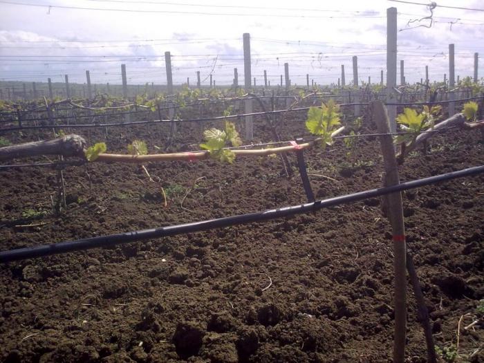 """Eкспертите в отдел """"Вино"""" ще се свързват със земеделските производители"""
