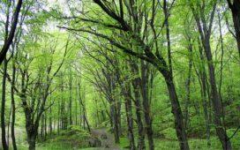 Всички 173 мобилни екипа на Държавните горски предприятия