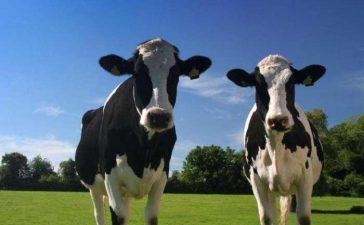 До 2020 г. ще се подпомагат овце и кози-майки само в планински райони и под селекционен контрол