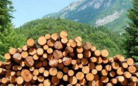 Няма да отпадне преференцията от 33% за добива на дървесина за местните фирми