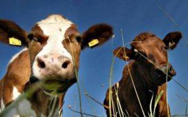 От 1 април до 15 май 2014 г. производителите и изкупвачите на краве мляко трябва да подадат годишни декларации за млечни квоти за директни продажби и за доставки