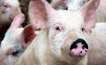 Протест на животновъди на 11 май пред Министерски съвет