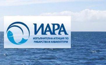 "Разстрелян делфин край къмпинг ""Корал"""