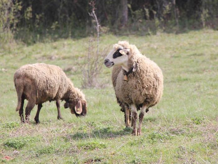 Фермерите отглеждащи до 50 животни ще получат по 50
