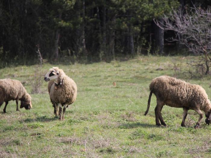 24 600 лв. от сумата е допълнение към схемата de minimis за фермерите от района на Хасково
