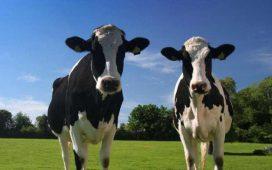 EkonMOD milk подпомага стопаните при вземане на икономически чувствителни решения